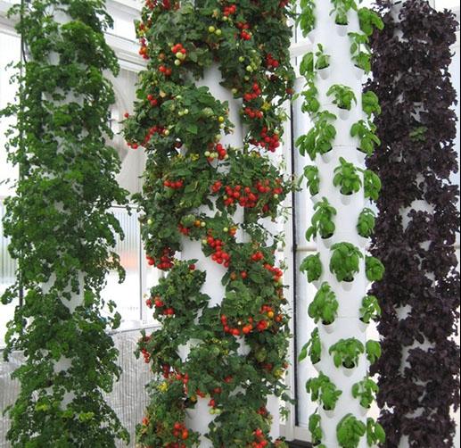 Vertical Farming Chicago: AEROPONIC